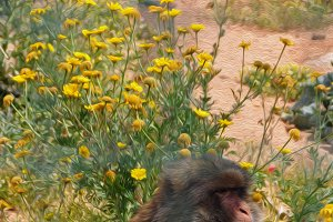 Monkey Yellow Flowers