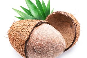 Coconut fruit isolated