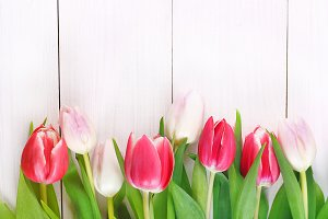 Happy mother's day. Tulips on a white wooden background