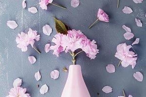 Various Backgrounds with Sakura