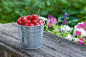 Metal bucket of sour cherries
