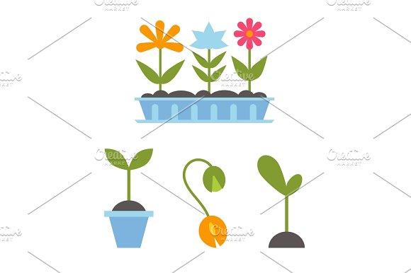 Spring Plants In Pots