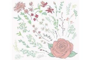 Colorful Drawn Herbs, Plants and Flowers. Vector Illustration