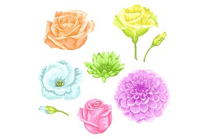 Set of decorative delicate flowers. Objects for decoration wedding invitations, romantic cards