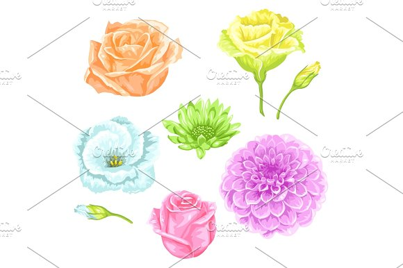 Set Of Decorative Delicate Flowers Objects For Decoration Wedding Invitations Romantic Cards