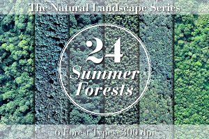 24 Summer Forests