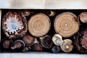 Logs of cut wood