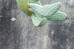 Cactus in the Wall