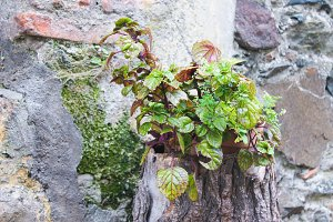 Wild Plant in the Wall