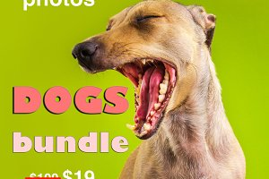 Funny dogs photo bundle