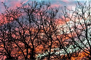 Tree against blue and red sky