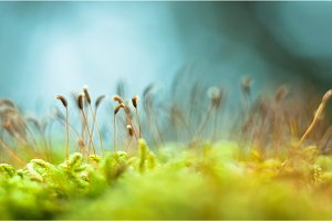 Bright green moss macro shot