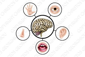 Five senses brain