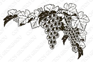 Grapes vintage style design