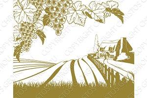 Vineyard rolling hills scene