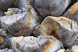 Palm Trunk Tree Underground