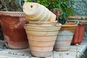 Cactus Concrete Rustic Detail