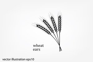 wheat ears vector icon