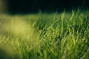 Fresh Green Grass in warm Sunlight