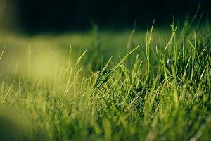 Fresh Green Grass in warm Sunlight