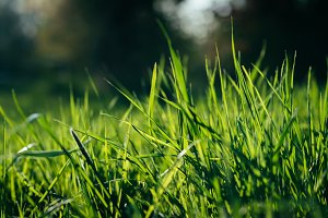 Fresh Green Grass (ideal Background)