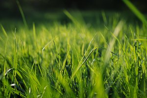 Green Grass in Spring (Vintage Look)