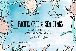 Pacific Crab & Sea Stars