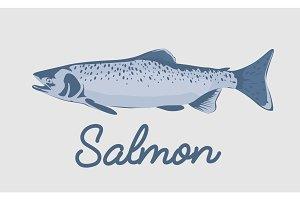 Salmon fish vector illustration