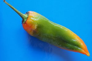 peppers vegetable over blue with copy space