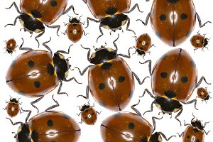 Ladybug Photo Pattern
