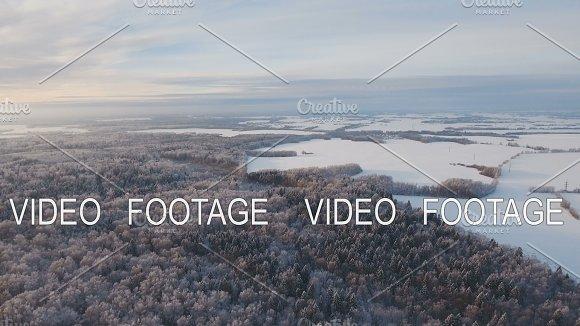 Winter Landscape With Forest Field Winter Landscape