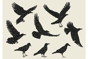 Set of black ravens. Hand drawn inky birds