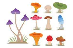 Mushrooms for cook food and poisonous nature meal vegetarian healthy autumn edible and fungus organic vegetable raw ingredient vector illustration.