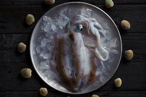 Fresh raw squid on metal plate