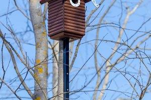 Nesting box on the tree