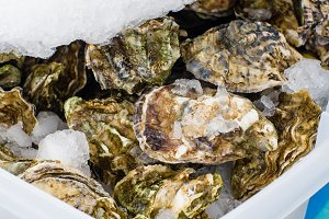 Fresh oysters at the market
