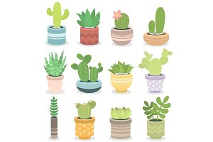 Cactus nature green succulent tropical plant vector illustration.