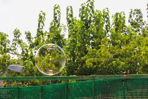 Bubble with Trees