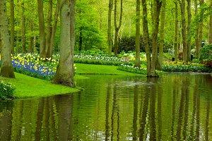 spring garden Keukenhof