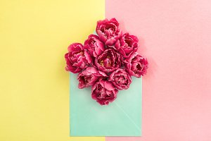 Tulip flowers in envelope