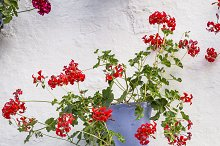 Wall with red flowers