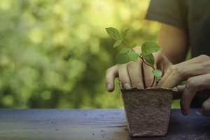 planting a new life