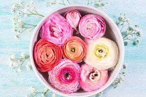 Beautiful pink ranunculus in bowl with water