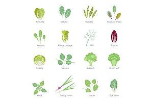 Leafy vegetables vector flat icons set.