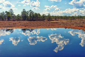 Sky and forest reflected in the water