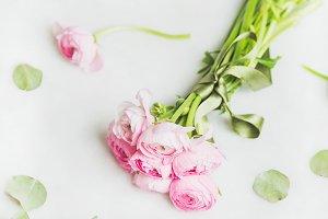 Light pink ranunkulus flowers