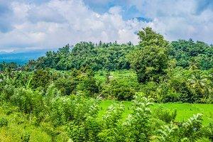 Rice tarrace and superb green jungle in Sidemen. Bali, Indonesia