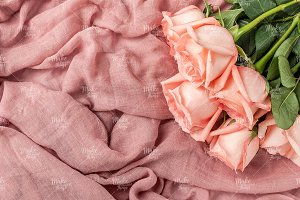 Pink roses stock photography #4084
