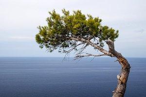 Tree i sea