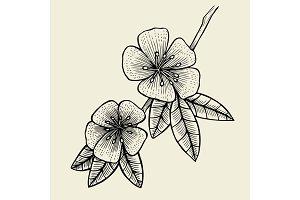 Hand drawn sketch Flower.